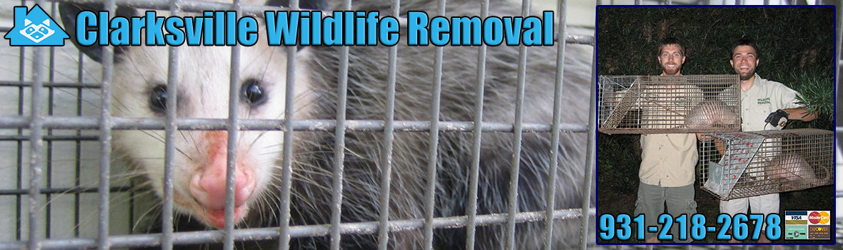 Clarksville Wildlife and Animal Removal